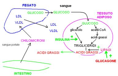 biochimica_clip_image035