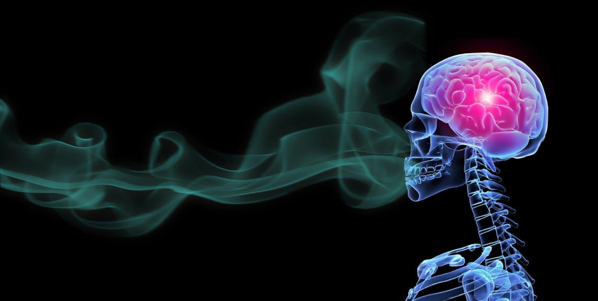 Questione di olfatto - parte seconda